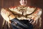 英国将展出澳洲巨型帝王蟹 体形比人大_大千世界