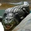 世界最大吃人鳄鱼死亡 身长超过6米_大千世界