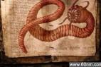 蒙古现存在世界上最恐怖的 死亡蠕虫_大千世界
