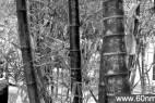 """植物园花木被刻""""到此一游""""竹子枯死_大千世界"""