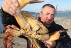 真不可思议;全球气候变暖 导致螃蟹变大_大千世界