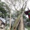 村民几十年做同一怪梦 皆因古树作祟?_大千世界