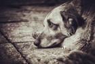 【乞丐与狗:感动数百万人的故事 】 我真心希望你看下去,然后转给他人