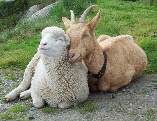 搞笑动物卖萌图片